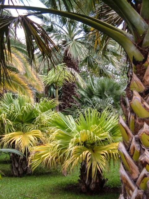 The Botanic Gardens, Madeira