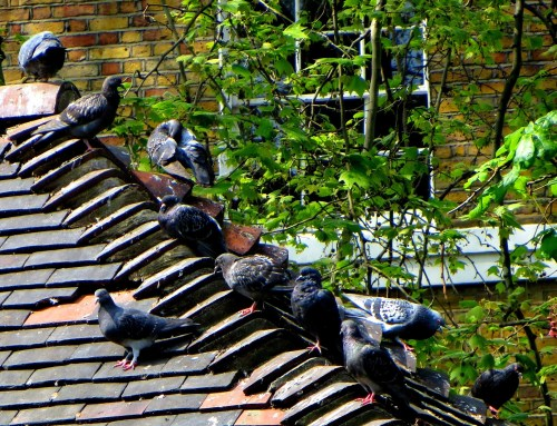 Basking pigeons over here!