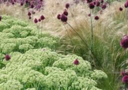 Stipa with Alliums (www.gaissmayer.de)