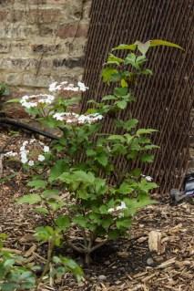15-6-1 London Garden LR-1755