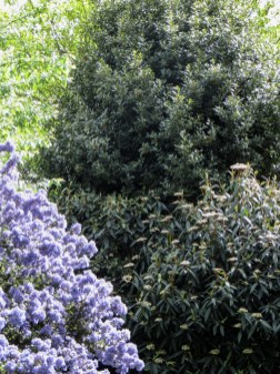 2014 Summer London Garden LR-4827