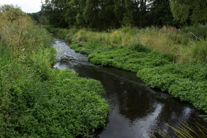 River Wensum, Pensthorpe