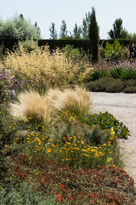 Stipa Gigantea and Stipa Tenuissima in the Dry Garden at Hyde Hall