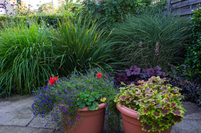 Pots on the patio, with Pennisetum, Libertia, and Miscanthus