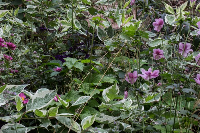 A small jungle of Dogwood, Japanese Anemone, and Deschampsia