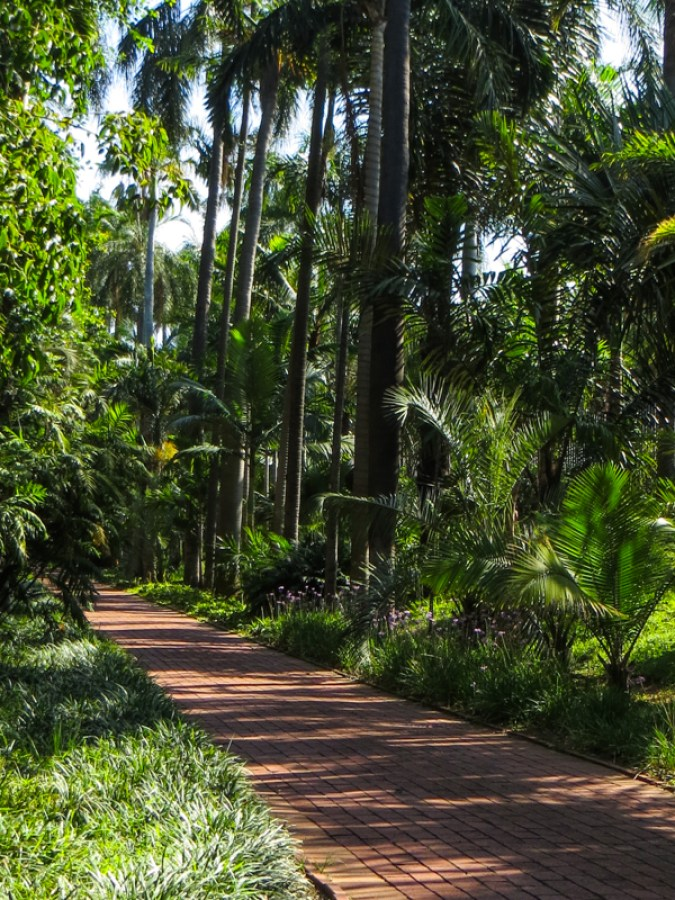 Palm Avenue in the Durban Botanical Gardens