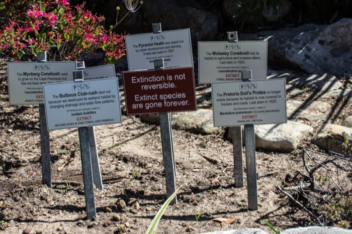 Conservation at Kirstenbosch Botanic Gardens