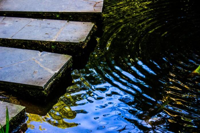 Water in Stellenbosch Botanic Gardens