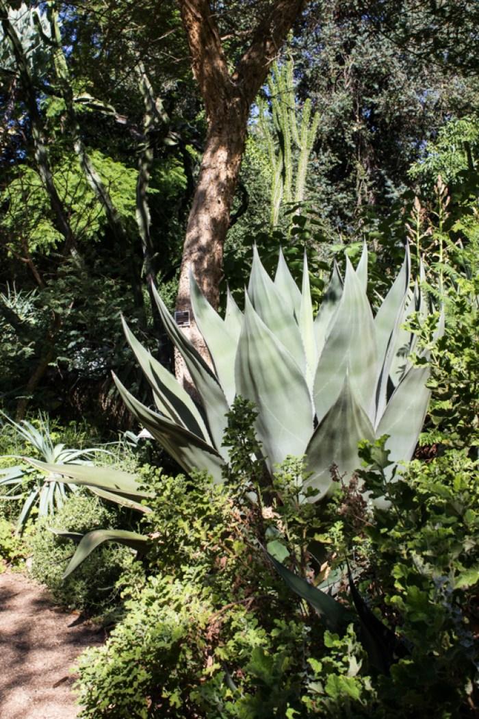 Succulents in Stellenbosch Botanic Gardens