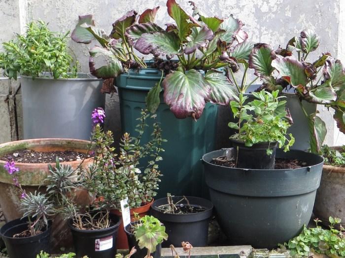The side garden in London