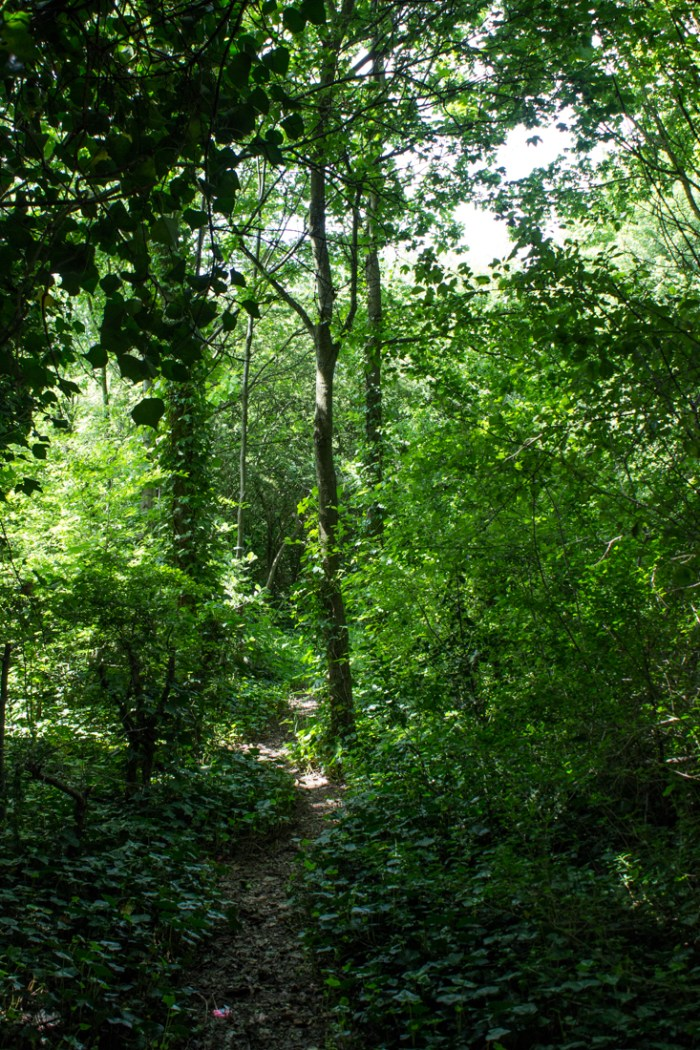Woodland walk in Stave Hill Ecology Park