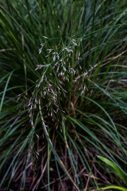 Grasses in Canary Wharf Roof Garden