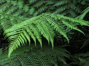 Ferns in Bina Gardens East