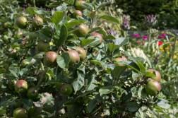 Wyken Hall Vegetable Garden