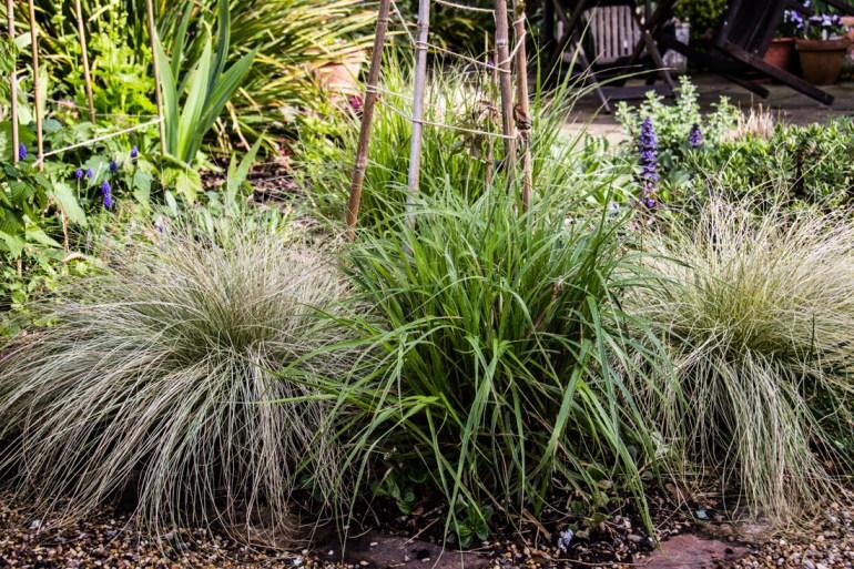 Carex & Luzula Nivea
