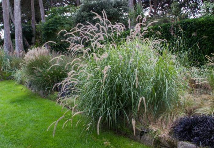 The Grass Garden in the Georges Delaselle Gardens