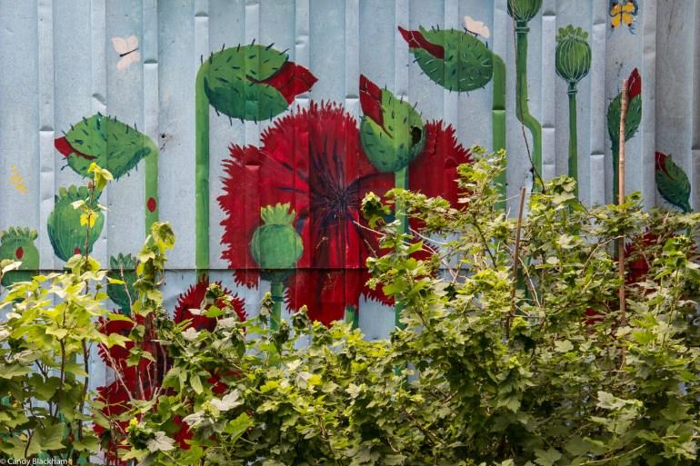 Cranbrook Community Garden