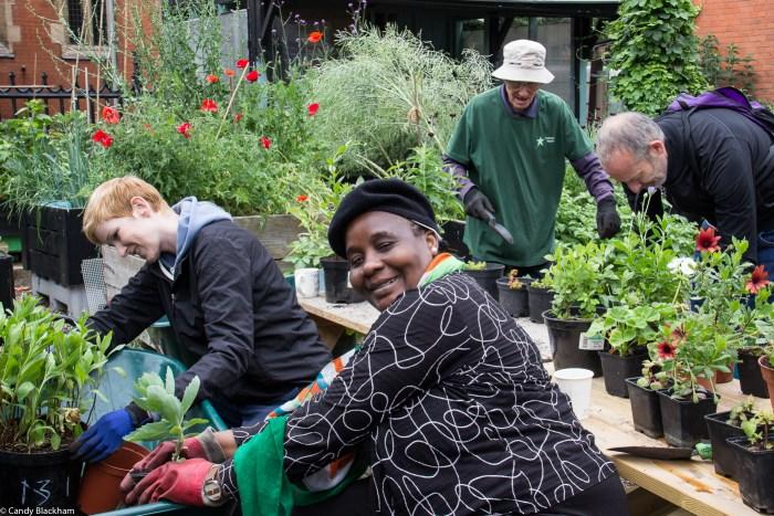 Volunteers repotting cuttings