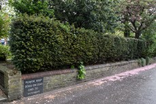 Yew hedging and original entrance from gardens to homes