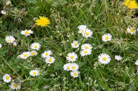 Wildflowers on the railway bank