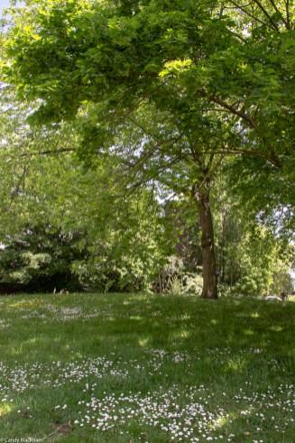 Upper Pepys Parks