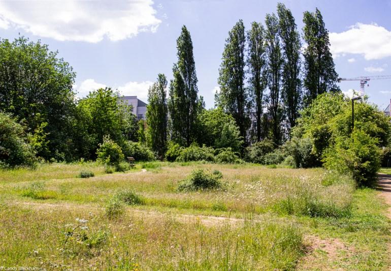 Wildflower meadow in Upper Pepys Parks