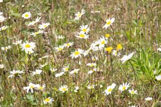 Wildflowers in Upper Pepys Parks