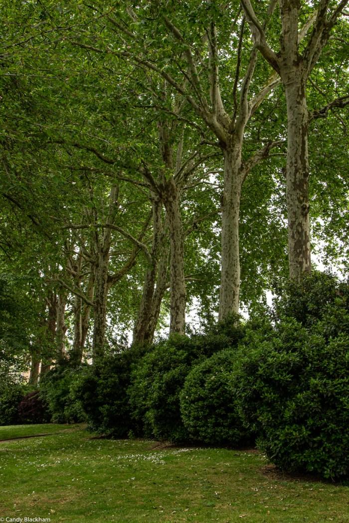 Trees in St Paul's churchyard gardens