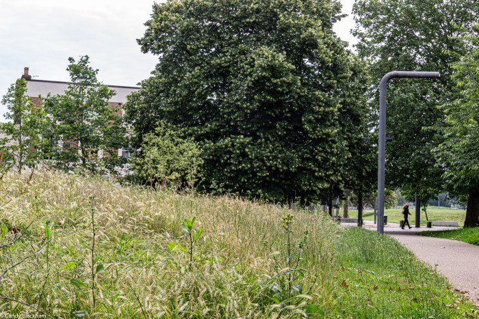 A 'wild' area in Fordham Park
