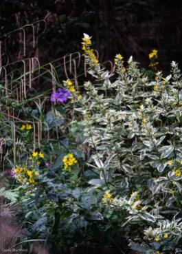 19-8-4 London Garden LR-9602