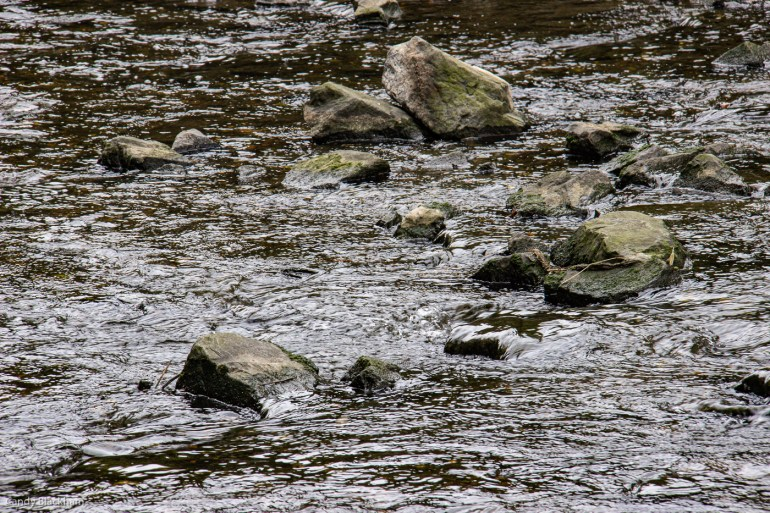 River Ravensbourne in Brookmill Park in Lewisham