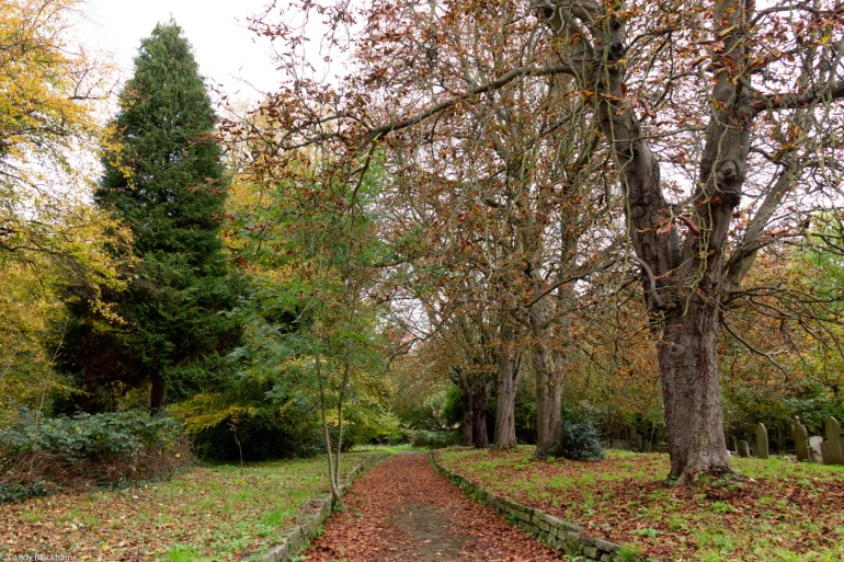 Plane trees in Brockley Cemetery in SE London