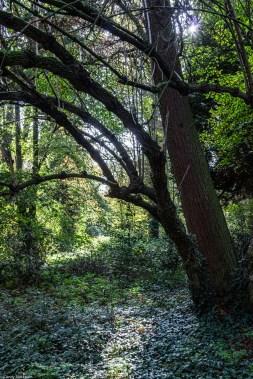 19-10-22 Brockley Cemetery LR-3090