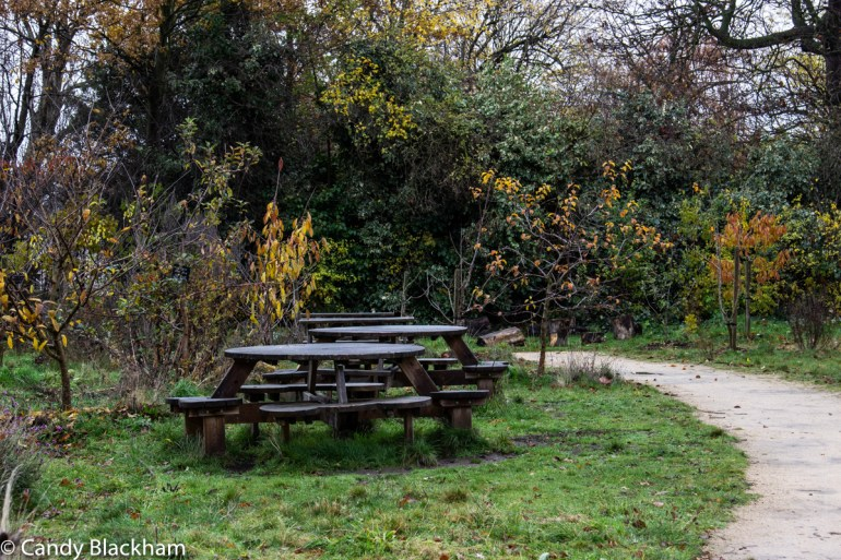 Picnic bench in Community Garden