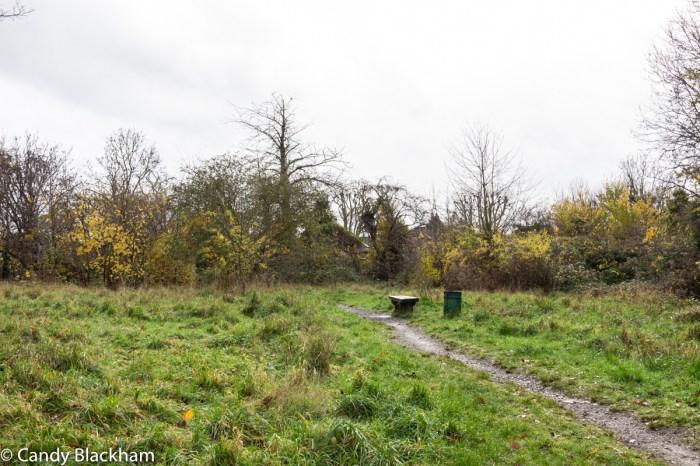 Mountsfield Park wild garden
