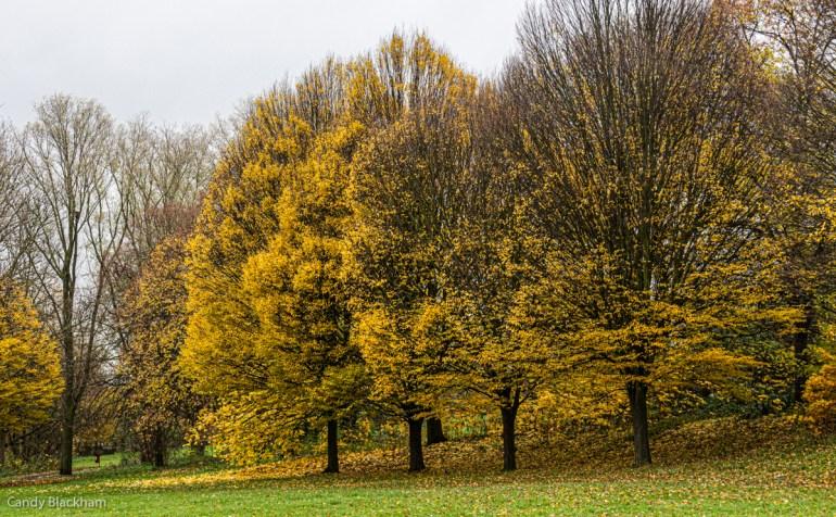 Park in Lewisham