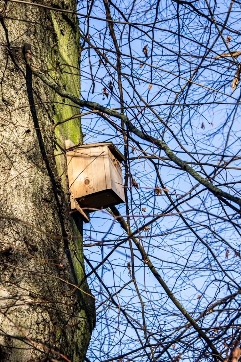 Bird box in Lewisham Park