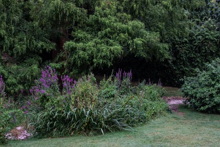 Dry rill in Sydenham Wells Park