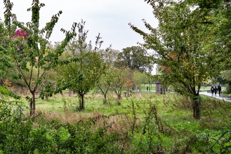 The Orchard in the South Field of Ladywell Fields