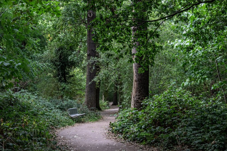 A Woodland Walk in Downham in South East London