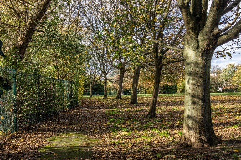 Trees in Southend Park
