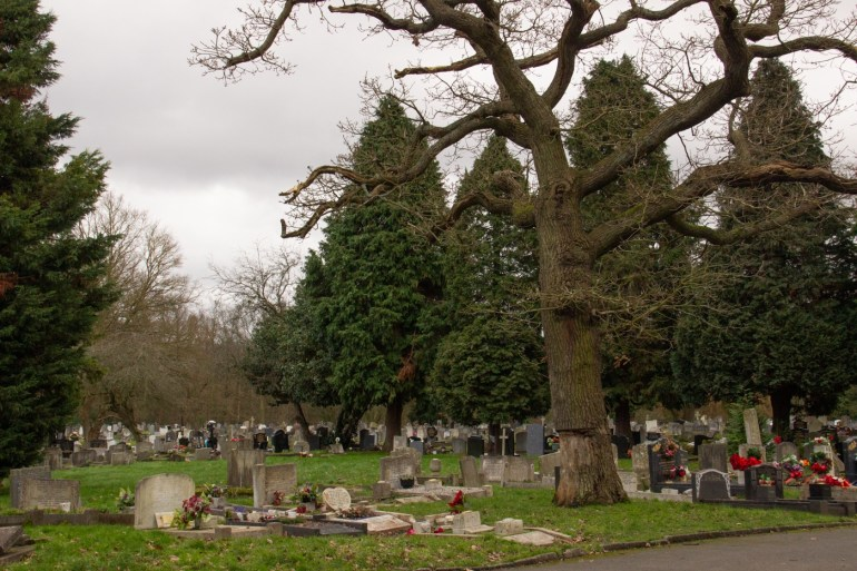 Oak tree and conifers in Grove Park Cemetery