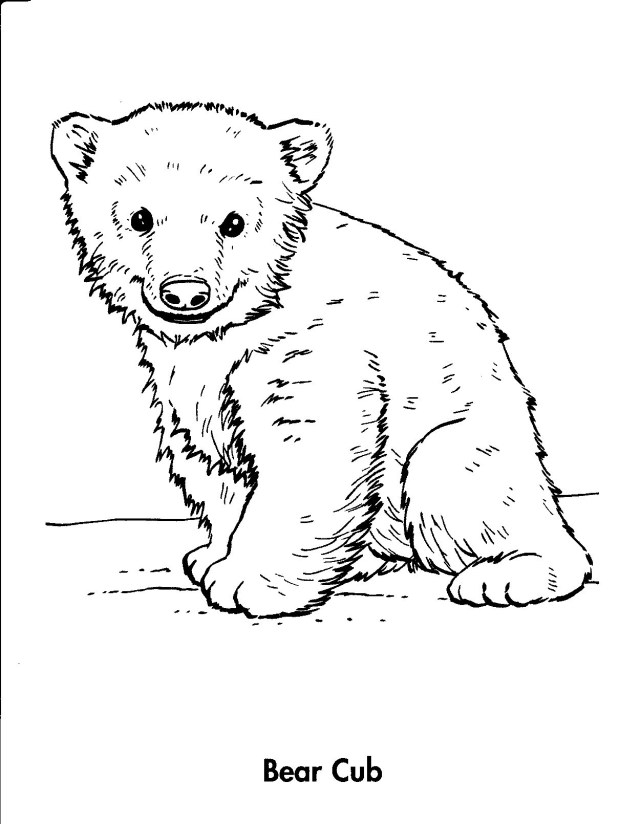 Bear Coloring Pages Homey Inspiration Polar Bear Coloring Sheets Best Coloring Ideas