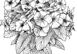 Coloring Pages For Adults Flowers Flower Coloring Pages For Adults Best Coloring Pages For Kids