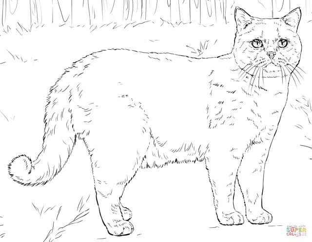 Coloring Pages Of Cats Cat Coloring Pages Cats Coloring Pages