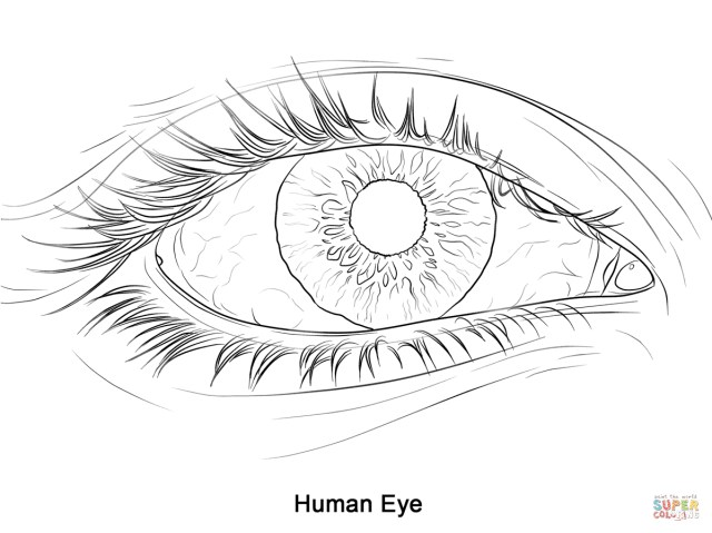 Eye Coloring Page Human Eye Coloring Page Free Printable Coloring Pages