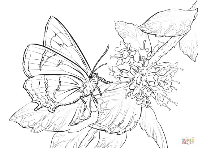 Free Butterfly Coloring Pages Free Butterfly Coloring Pages Butterfly Coloring Pages Free Coloring