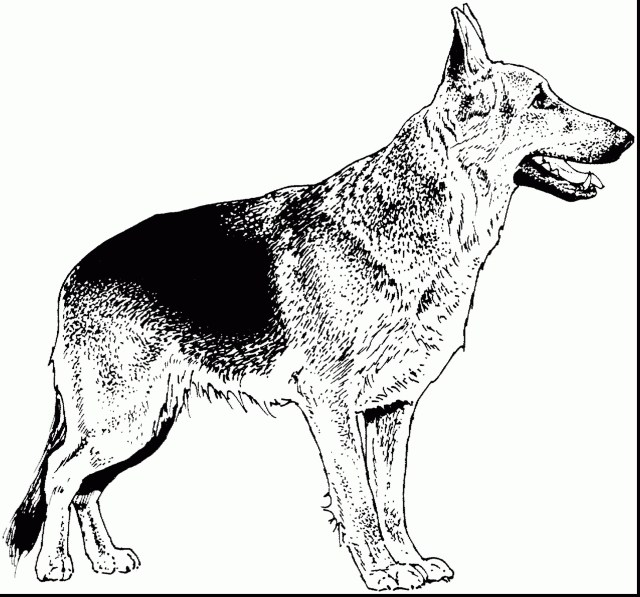 German Shepherd Coloring Pages 18 German Shepherd Coloring Pages Topsailmultimedia