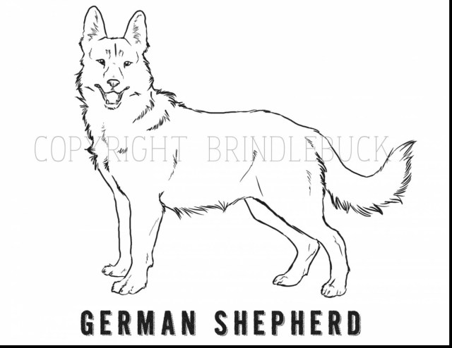 German Shepherd Coloring Pages German Shepherd Sitting Coloring Pages Free Coloring For Kids 2019