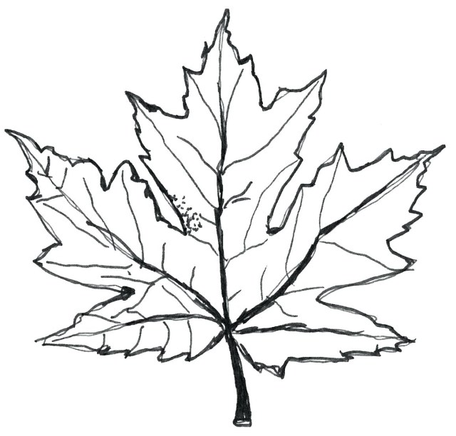 Leaf Coloring Page Maple Leaf Coloring Page Neuhne